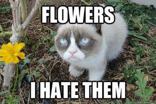 Grumpy Cat - Je hais les fleurs