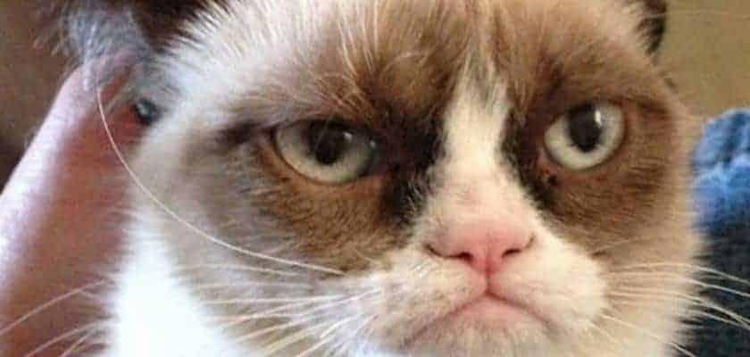 Grumpy Cat - Une tête inoubliable