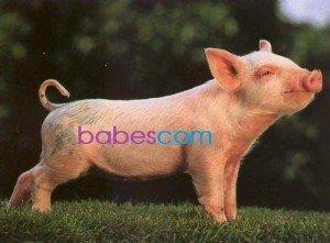 Gamescom 2014 : Les babes cochonnes