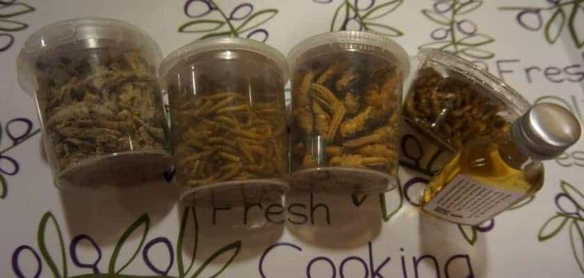 Manger des insectes - les petits pots reçus de la boutique insolite