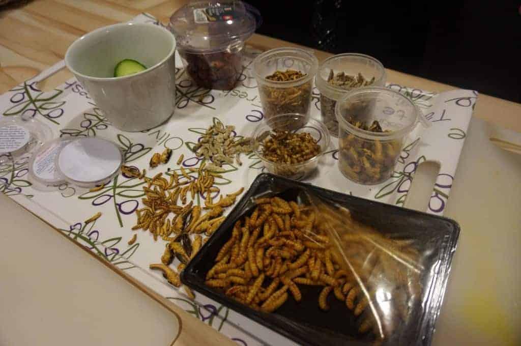 Manger des insectes - le plan de travail