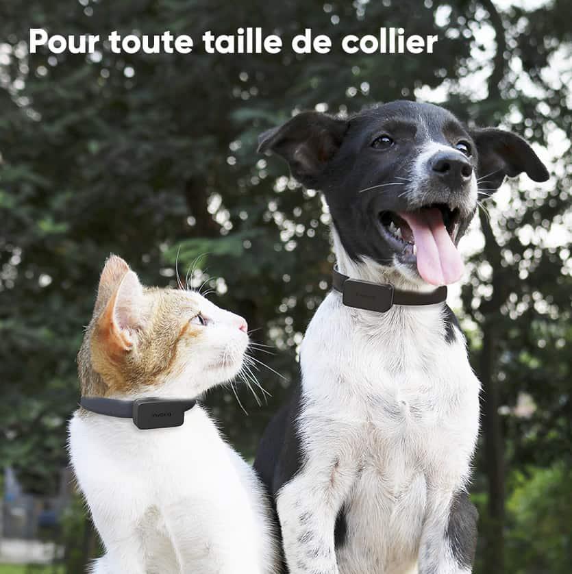Pet Tracker Invoxia - Aussi bien pour chat que pour chien