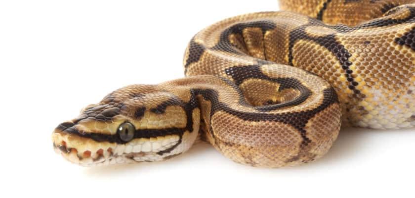 Apprendre le python est une bonne entrée dans le monde de la programmation